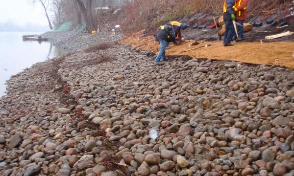 Stabilisation de berges à l'aide de techniques du génie végétal et génie civil|Rivière Saint-Mauricie
